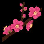 flower_ume_kaika[2]